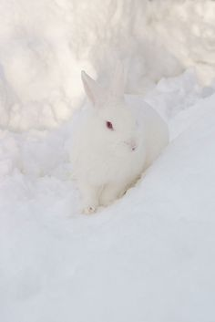 Snow Bunny...you can't see me...but I see you...