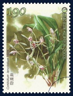 Korean Orchid Series (3rd), Cymbidium lancifolium Hook, Plants, Green, Pink, 2003 11 12, 한국의 난초 시리즈(세번째묶음), 2003년 11월 12일, 2349, 죽백란, postage 우표