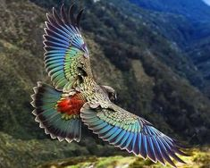 Parrot found only in the South Island of New Zealand and the only alpine pa… Kea. Parrot found only in the South Island of New Zealand and the only alpine parrot in the world! All Birds, Birds Of Prey, Love Birds, Angry Birds, Pretty Birds, Beautiful Birds, Animals Beautiful, Beautiful Butterflies, Beautiful Pictures