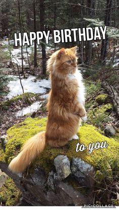 Awesome 8 Cats Behavior Facts That Most Interested - Wings Bird Pro Birthday Cheers, Happy Birthday Pictures, Happy Birthday Funny, Happy Birthday Quotes, Cat Birthday, Happy Birthday Wishes, Birthday Greetings, Birthday Memes, Birthday Cards