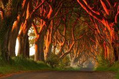 Los 8 tuneles de árboles más bonitos del mundo en otoño