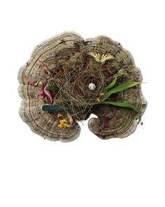 a nest hoard [ bracket fungus ] Mushroom Crafts, Tree Mushrooms, Natural Curiosities, Nature Crafts, Nests, Reggio, Diy Projects To Try, Fungi, Art Inspo