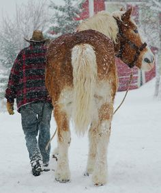 heading out...time to pull the sleigh!