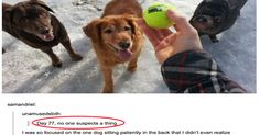 Proof That Animals are the Funniest Thing on Tumblr!
