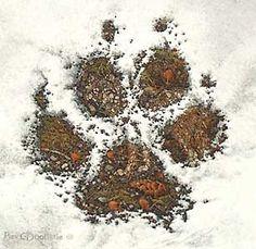 Walk Softly - Bev Doolittle - World-Wide-Art.com - $275.00 #Doolittle #NativeAmerican