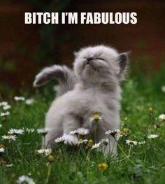 Bitch Im Fabulous - funny cat meme - http://jokideo.com/bitch-im-fabulous-funny-cat-meme/