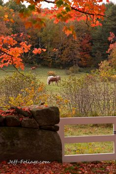 New England Fall Foliage | ... this one where the fall foliage colors compliment a rustic farm scene
