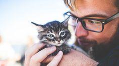 #Oferta de empleo: en Irlanda necesitan cubrir la plaza de 'abrazador' de gatos - RT en Español - Noticias internacionales: RT en Español -…