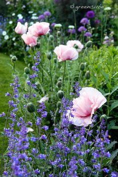 greencube garden and landscape design, UK gorgeous gardens English Garden Design, Cottage Garden Design, Cottage Garden Plants, Garden Grass, Garden Path, Cottage Garden Borders, Border Garden, Beautiful Gardens, Beautiful Flowers
