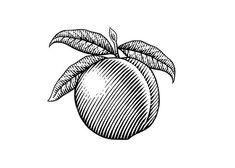 Peach Woodcut