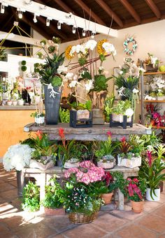 Bakos & Gallien - Growing Wild Flower Shop