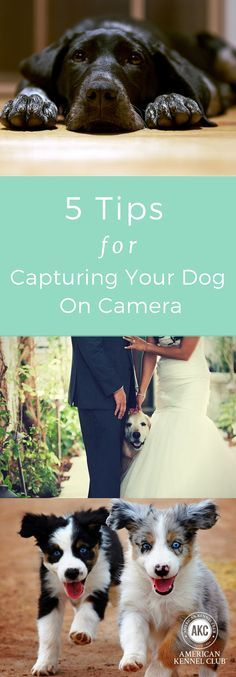 Looking to take great photos of your dog? Australian photographer Alex Cearns of Houndstooth Studio, who specializes in dog photography, has perfected the art of bringing dogs' vibrant facial expressions to life in her various heartwarming images. She pre Pet Photography Tips, Animal Photography, Kodak Moment, Dog Hacks, Smiling Dogs, Dog Training Tips, Potty Training, Happy Dogs, Great Photos