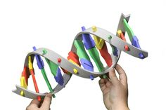 Our friendly, interactive foam DNA model makes double-stranded DNA and single-stranded RNA. It will quickly capture your students' attention as you introduce the basics of DNA structure then move into replication and transcription. 3d Dna Model, Dna Model Project, Dna Facts, Discovery Kit, Dna Replication, Next Generation Science Standards, Transcription, Dna
