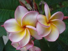Tropical, Fiori, Petali, Esotici, Rosa, Flora, Piante