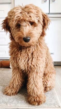 Really Cute Puppies, Super Cute Puppies, Cute Baby Dogs, Cute Funny Dogs, Cute Funny Animals, Cute Small Dogs, Cute Dog Pictures, Baby Animals Pictures, Cute Animal Photos