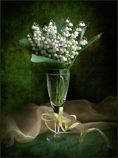 Lily of the Valley arranged in glass with yellow ribbon & green background