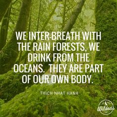 """""""We inter-breath with the rain forests, we drink from the oceans. They are part of our own body."""" - Thich Nhat Hanh 🌲🌳🌲🌳 #reciprocity #rainforest #ocean #body #connected #wildness #wearethewild #wearewildness #Nature"""