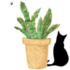 ALOE PLANT.A black cat is sitting next to an Aloe plant in a pot one... (€2,38) via Polyvore featuring home and home decor