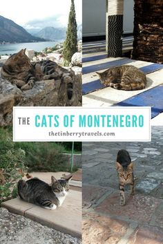Montenegro is a country filled with rugged landscapes, mountain views and diverse history....oh and cats. Check out our post on the cats of Montenegro.