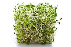 Clover sprouts are the new alfalfa - the basic leafy sprout. Clover is easier to sprout and is a prettier green. You can let them get up to long. Genetically Modified Food, Sprouting Seeds, Kinds Of Vegetables, Eating Before Bed, Food Charts, Healthy Food List, Healthy Foods, Vegan Blogs, Raw Vegan