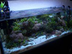 Macro Algae Tank Journal (dialup Warning) - Page 3 - Reef Central Online Community Aquarium Stand, Nano Aquarium, Aquarium Design, Marine Aquarium, Reef Aquarium, Planted Aquarium, Saltwater Tank, Saltwater Aquarium, Freshwater Aquarium