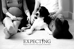 A maternity photography session at home with pet dog.