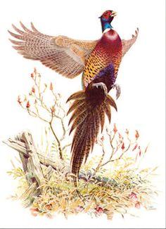 Faisán en el arte - Búsqueda de Google Wildlife Paintings, Wildlife Art, Common Pheasant, Hunting Art, Bird Poster, Pheasant Hunting, Game Birds, Watercolor Bird, Dog Art
