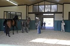 Biosecurity in the Breeding Shed - TheHorse.com | Biosecurity isn't just a consideration for show horses. Here are some tips on how to keep breeding stock disease-free. #horses #horsehealth #biosecurity #breedinghorses