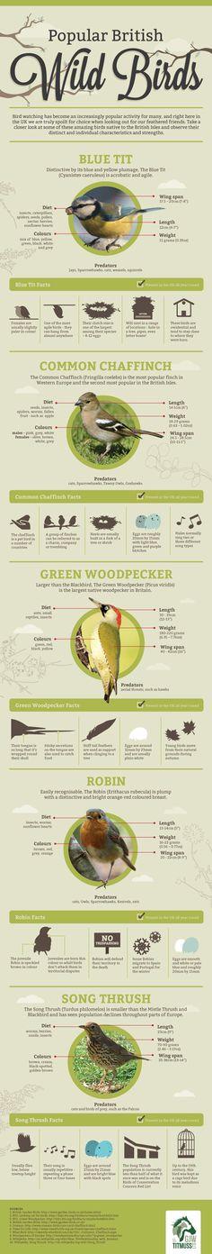 How to Encourage Wild Birds to your Garden