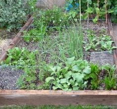 Crops to Kick Off Your Spring Garden