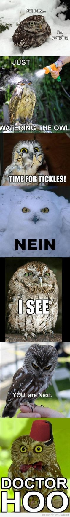 Owl emoticons