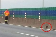 Pengakhiran hidup tragis ayam jantan sesat di Jambatan Pulau Pinang   Seekor ayam jantan sesat di Jambatan Pulau Pinang menemui pengakhiran hidup yang tragis walaupun pasukan penyelamat cuba menyelamatkannya.  Difahamkan ayam jantan itu dikesan sekitar pukul 7.30 pagi Sabtu oleh beberapa pemandu dan pasukan peronda dari PLUSRonda serta Projek Penyelenggaraan Lebuh Raya Berhad (Propel) di KM1.2 jambatan tersebut.  Ayam Jantan Temui Ajal Di Jambatan Pulau Pinang  Ayam jantan itu dilihat dalam…