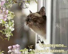 Запах Весны...