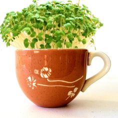 DIY Microgreens Garden Kit in Midcentury Russel Wright Tea Cup - White Clover pattern Harkerware
