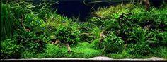 Marcel Dykierek a aquascaping - Aqua Rebell