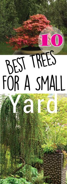 Perfect 10 Best Trees For Small Yards U2013 Making DIY Fun