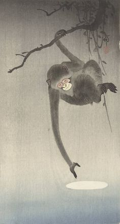 Gibbon reaching for reflection of the moon Author: Ohara, Koson (Japanese, Date: Medium: Color woodblock print Location: Freer and Sackler Galleries, The Smithsonian's Museums of Asian Art Japanese Painting, Chinese Painting, Chinese Art, Ohara Koson, Monkey Art, Year Of The Monkey, Illustration Art, Illustrations, Japanese Prints