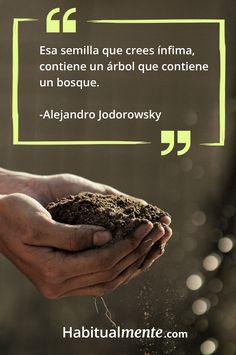 Frase sobre el poder de las pequeñas cosas: Una semilla tiene el potencial de crear un bosque