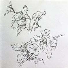New plants pattern tattoo 22 Ideas Flower Sketches, Drawing Sketches, Art Drawings, Botanical Art, Botanical Illustration, Plant Drawing, Line Art, Flower Art, Embroidery Patterns