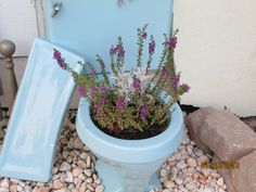 Recycled 1977 powder blue toilet is now a planter.  I figured that planters are getting so expensive, why not put this good porcelain bowl to use...Ok, I'm a little bit country :)