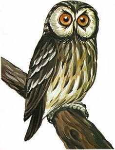 Картинки для игр и творчества | 153 photos | VK Animal Stencil, Felt Birds, Animal 2, Bird Illustration, Bird Pictures, Owl Art, Bird Feathers, Beautiful Birds, Painting & Drawing