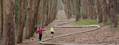 """One of our favorite destinations to explore with the family in San Francisco are the trails that run throughout the Presidio National Park. Today, we walked """"Lover's Lane"""", the oldest foot trail in the Presidio. Lovers Lane is... Read More"""