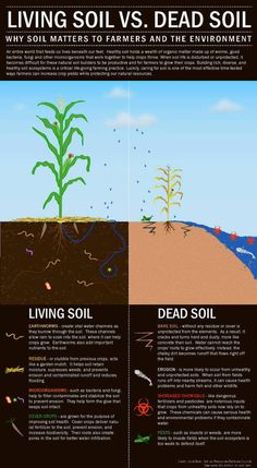 THIS IS WHY I GROW MY OWN FOOD! The nutrition in the soil that grows the food supply is depleted. Composted soil is my fertilizer and crop rotation every three years is a must! 5 Signs of Healthy Soil: - Gardening Life Today
