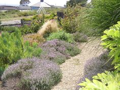 This front yard has a sweep of Thyme and grasses as well as Protea.