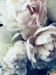 pastel peonies - Vicki Archer // https://www.instagram.com/vickiarcher/