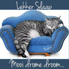 Goeie Nag, Good Night, Night Night, Afrikaans, Sweet Dreams, Cats, Animals, Language, Paintings