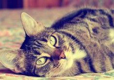 Cat Gorgeous Eyes