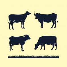 Find Cow Silhouette Vector Icon Black Angus stock images in HD and millions of other royalty-free stock photos, illustrations and vectors in the Shutterstock collection. Cow Logo, Farm Logo, Cow Vector, Vector Icons, Cow Icon, Logo Animal, Name Card Design, Animal Drawings, Drawing Animals