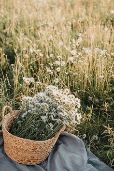 Photo by Anita Austvika on Unsplash Spring Aesthetic, Nature Aesthetic, Flower Aesthetic, Wild Flowers, Beautiful Flowers, Fresh Flowers, Ed Wallpaper, Collateral Beauty, Photo Portrait