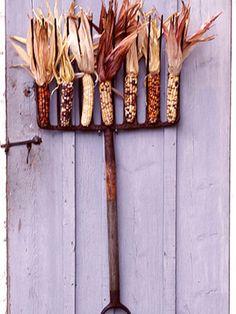 Autumn corn. Now where did I put my pitchfork?